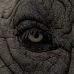 Stare Down The Elephant and Conquer Your Doubts